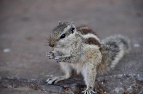 Squirrel(?) friend