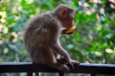Monkey on the balcony
