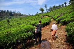 Tea plantation hike