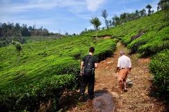 Tea plantation hike