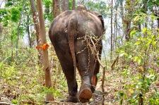 Jungle walks