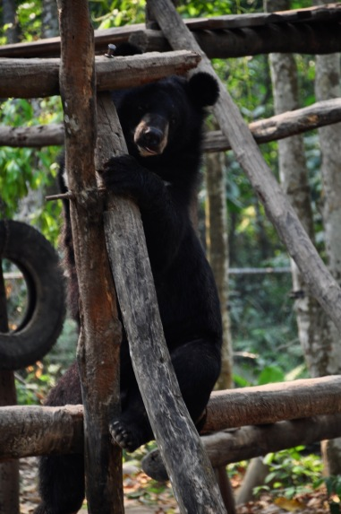 Bear rescued from the bile trade