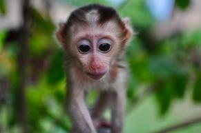 My favourite monkey shot
