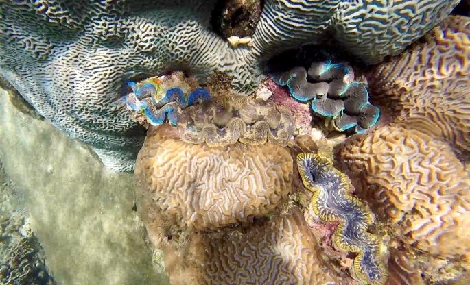 Brightly coloured closing shells