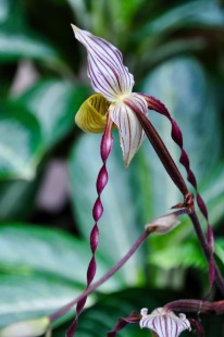 Twirly orchid