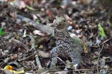 Monitor Lizard!