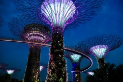 The super trees of garden's by the bay