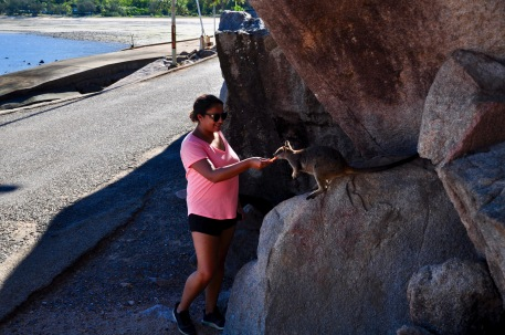 Feeding the wild wallabies