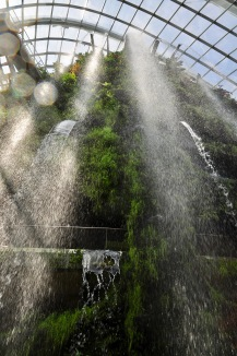Cloud forest's waterfall