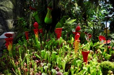 Part lego, part real carnivorous plants!