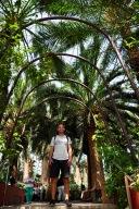 Tropical archways