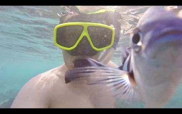 Photobombing Sergeant Major fish