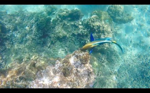 Koh Tao marine life
