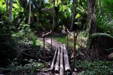 Log bridges
