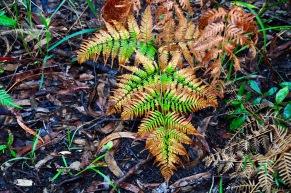 Noosa national park ferns