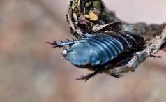Massive cockroach!