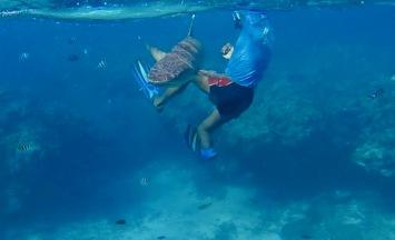 Resort guide and reef shark