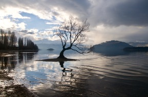 Lone Willow Tree, Wanaka