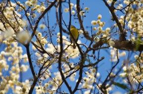 Birds of Salta
