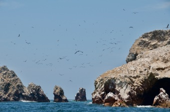 Birds over Ballestas islands