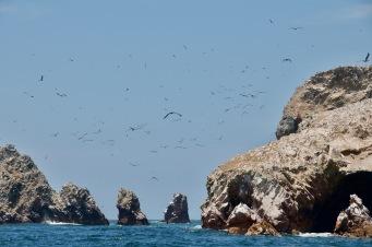Birds over Ballestas islands