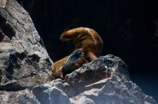 Sea lion gymnastics