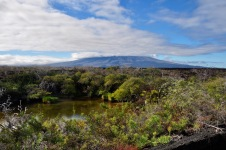 Punto Moreno scenery
