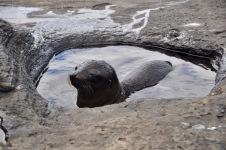 Sea Lion pup taking a bath