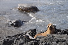 Turtle, Sea Lion and Iguanas