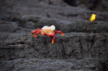 Crab shedding its shell