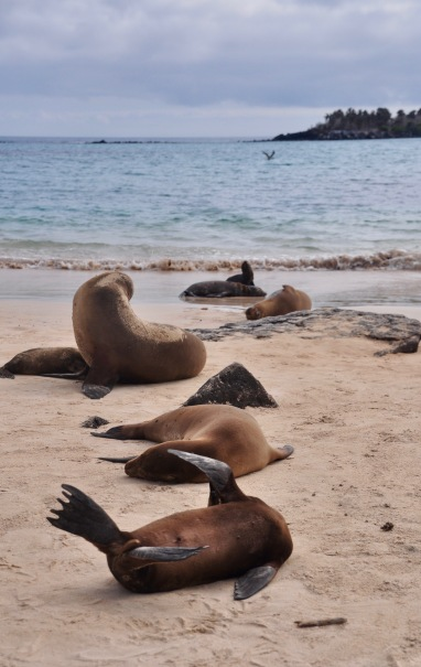 Sea lions sprawled on the beach