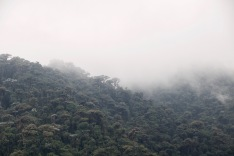 The mist descending over the Cloud Forest