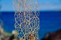 Cactus skin
