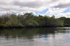 Elizabeth Bay