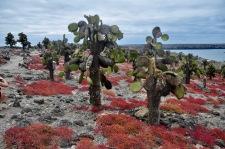 Cactus and sesuvium plant