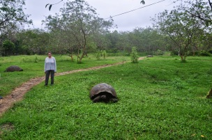 Giant tortoise with Sophie in the background
