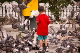 A young boy feeding pigeons in Guayaquil