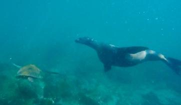 Sea lion and the sea turtle