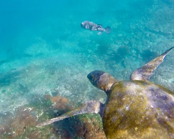 Birds eye view of a turtle and pufferfish