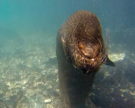 Friendly Sea Lion